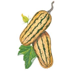 Squash + Pumpkins
